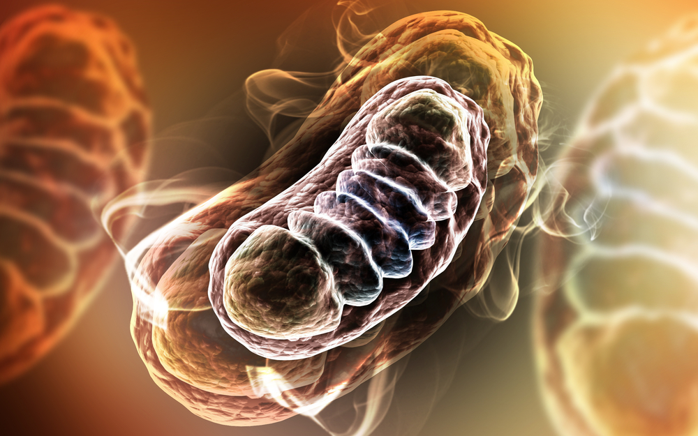 CHOP Researchers Restore Cellular Energy Signals, Offering Possibility of Treating Mitochondrial Diseases